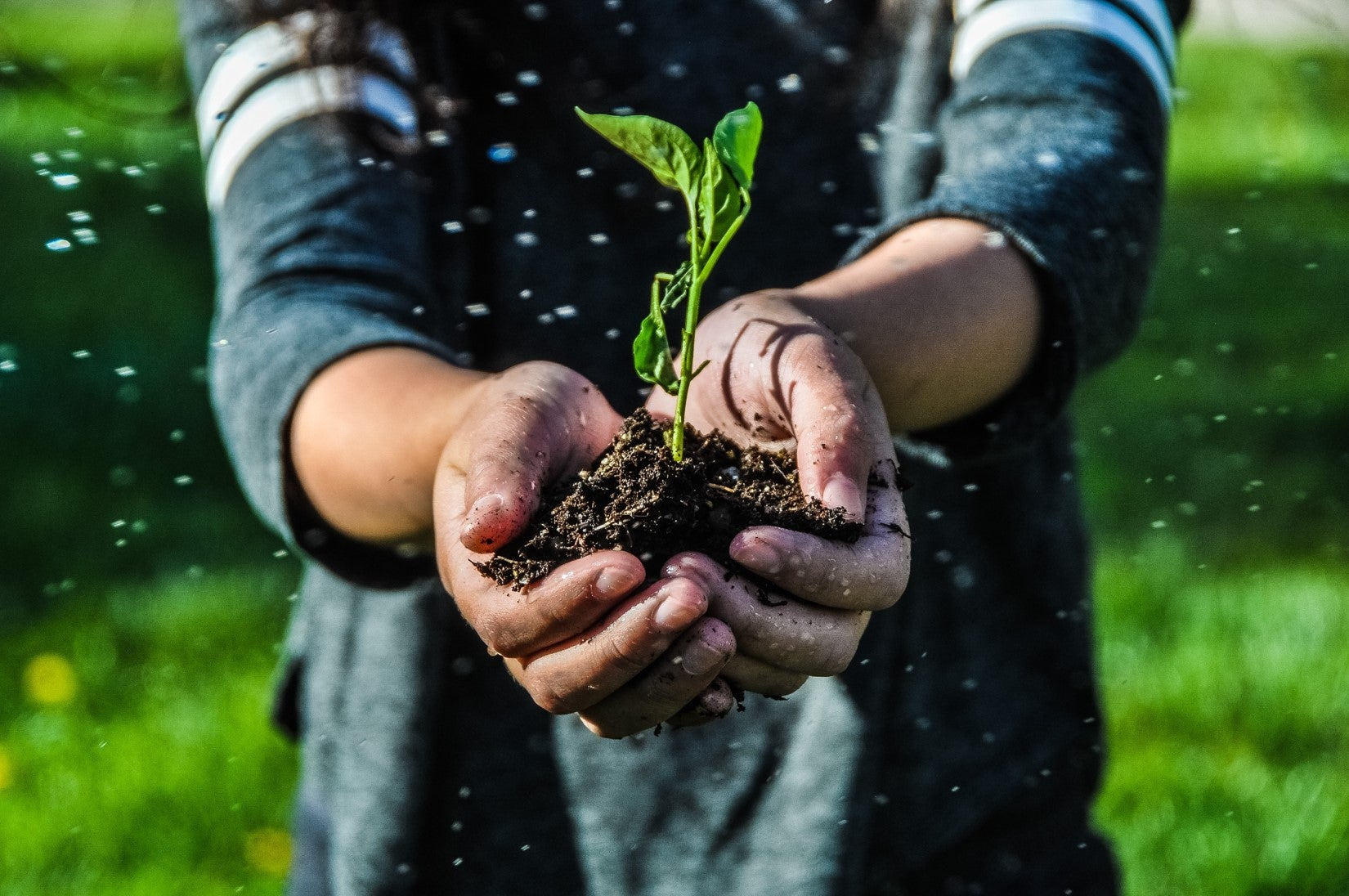 Two hands extended toward the camera holding soil with a green sprout emerging.